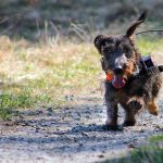 Dogs may use Earth's magnetic field to take shortcuts – Science Magazine